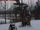 Wheelbarrow and Stump in Snow, Groveland, NY