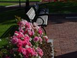 Roses and Park Benches, Columbus Park, Boston