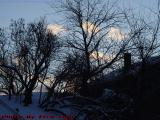 Winterscape With Silhouetted Trees, Dell Court, Lynn