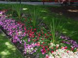 Mostly Shaded Bed of Flowers, Boston Public Garden
