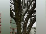 Unhappy Tree With April Snow, Wellsville, New York